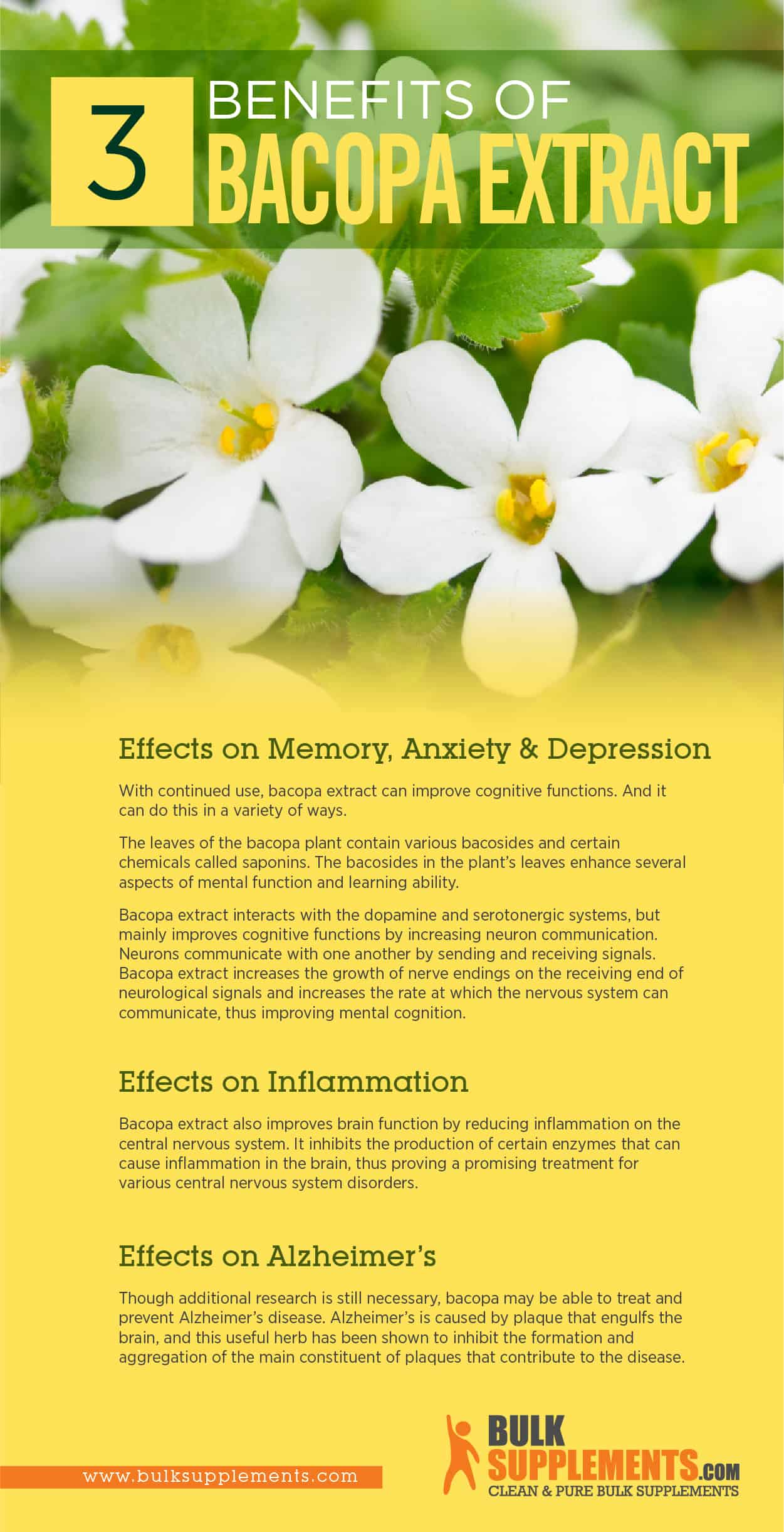 Bacopa Benefits