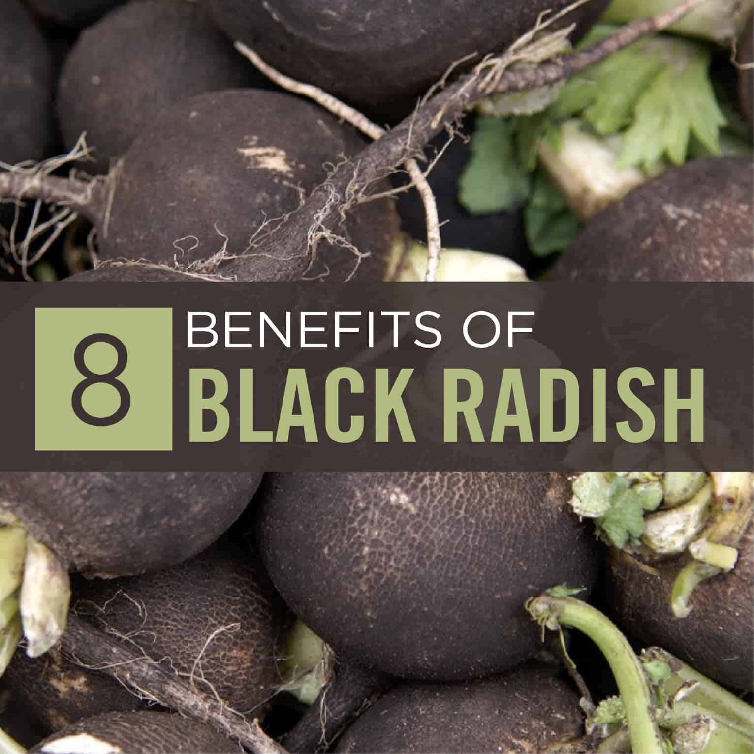 Black Radish