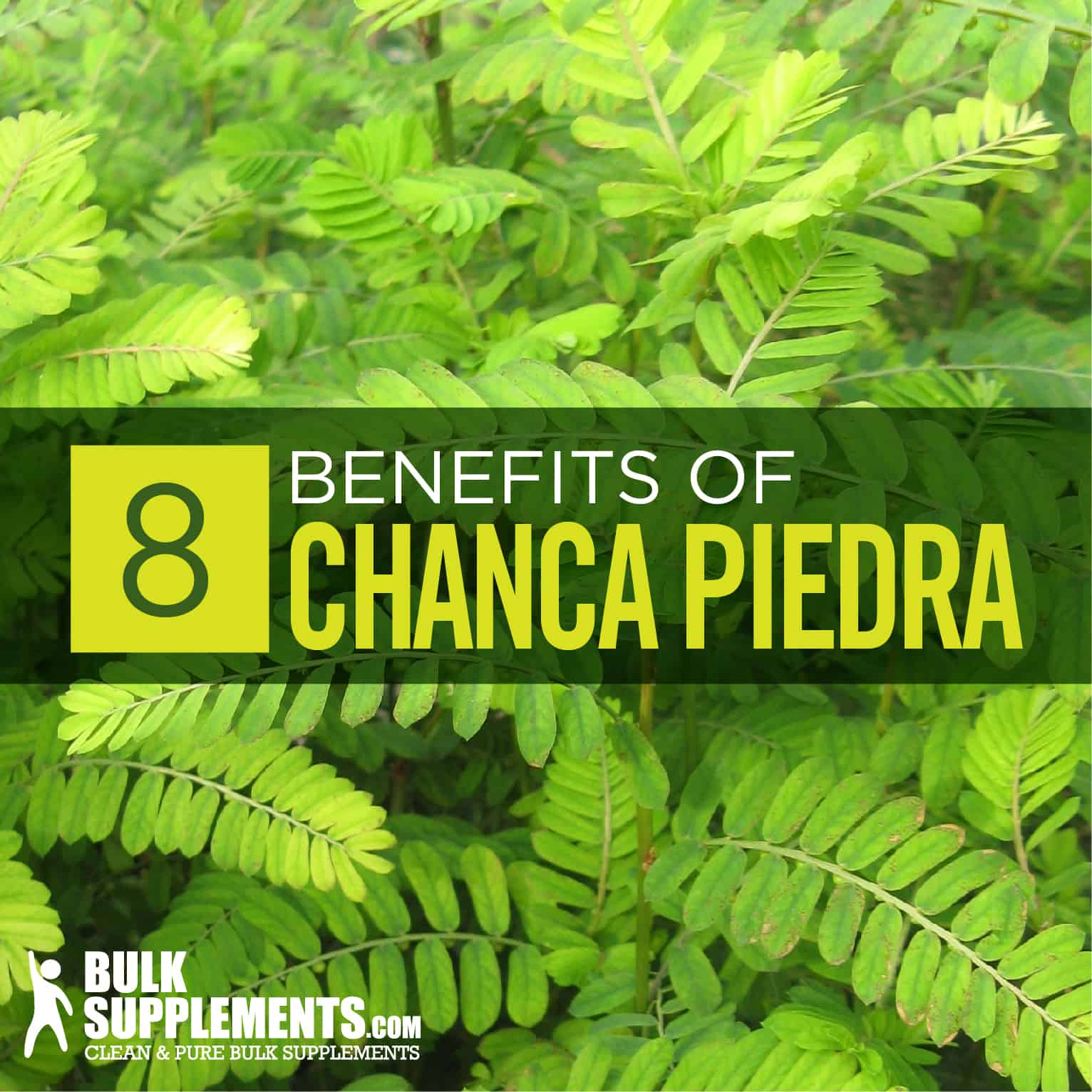 Chanca Piedra: Benefits, Side Effects & Dosage