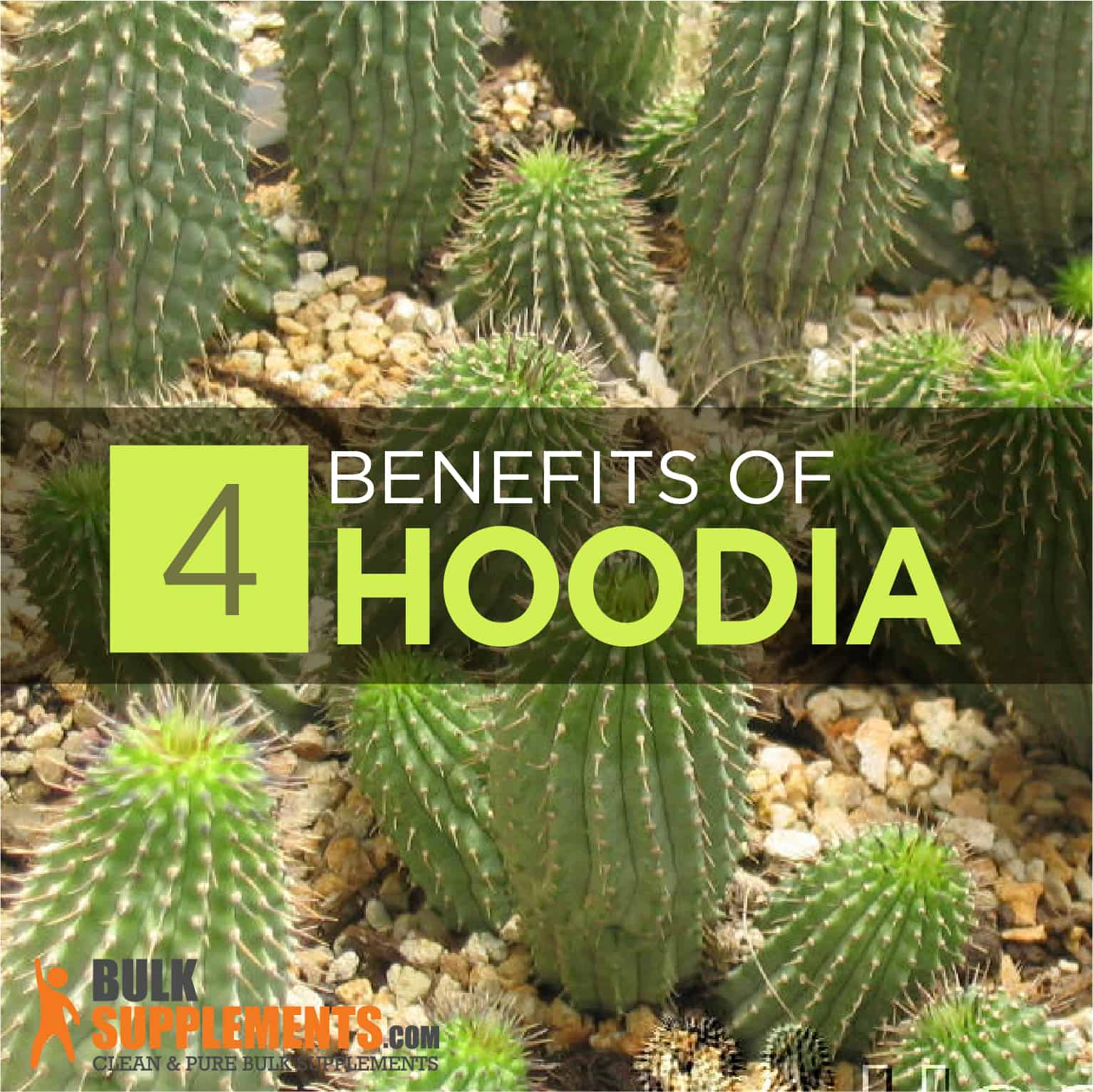 Hoodia Benefits Side Effects Dosage Bulksupplements Com