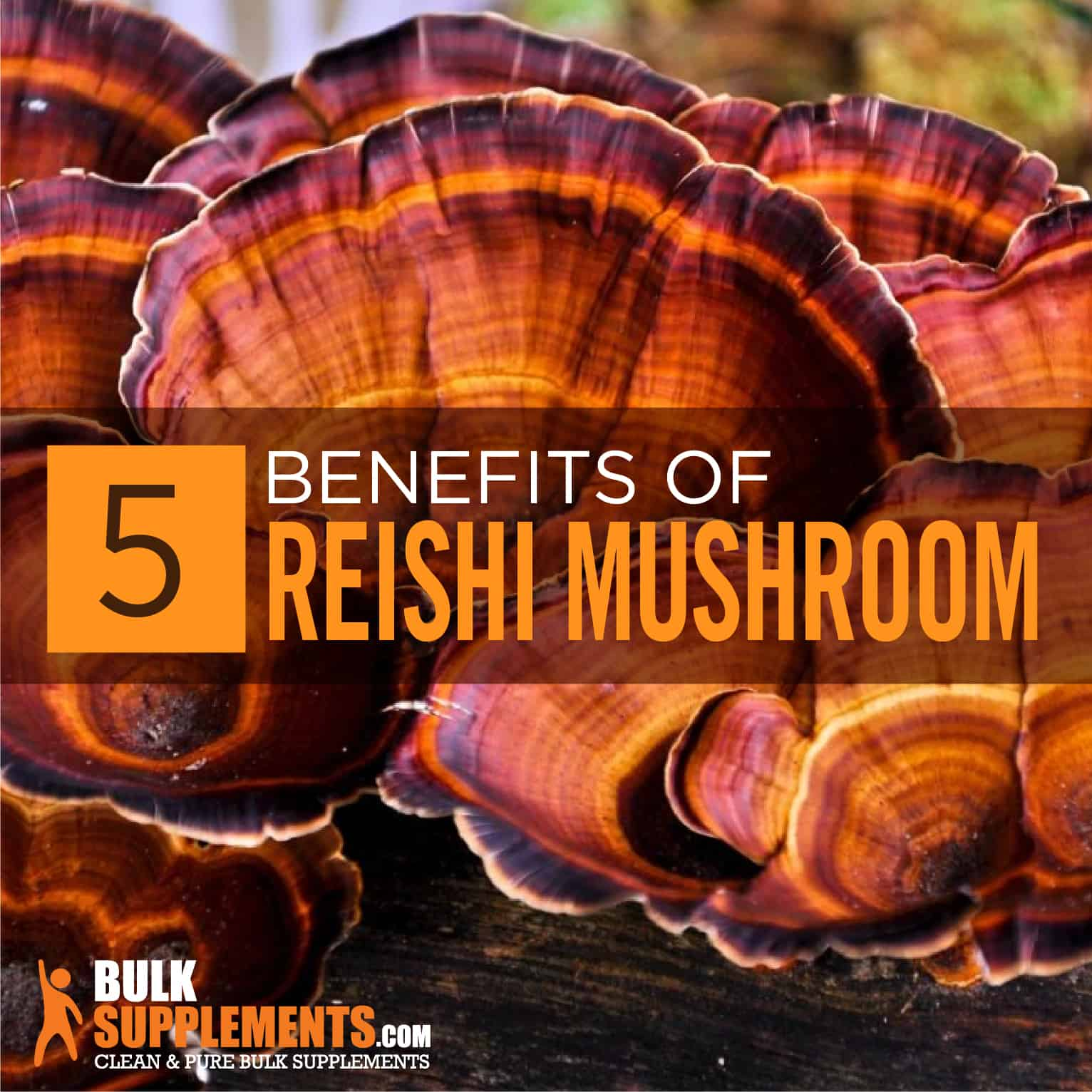 Reishi Mushroom Extract Benefits, Side Effects & Dosage