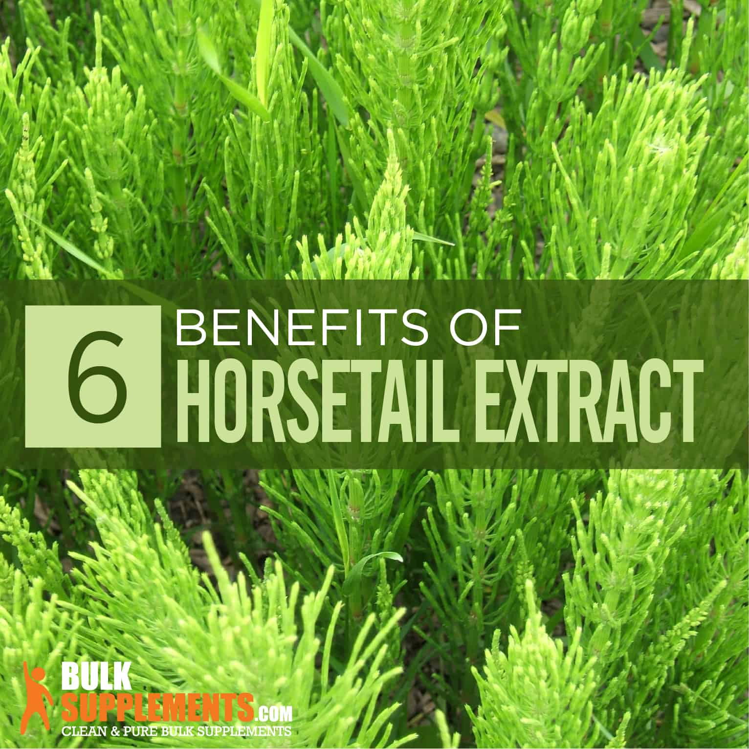 Horsetail Extract