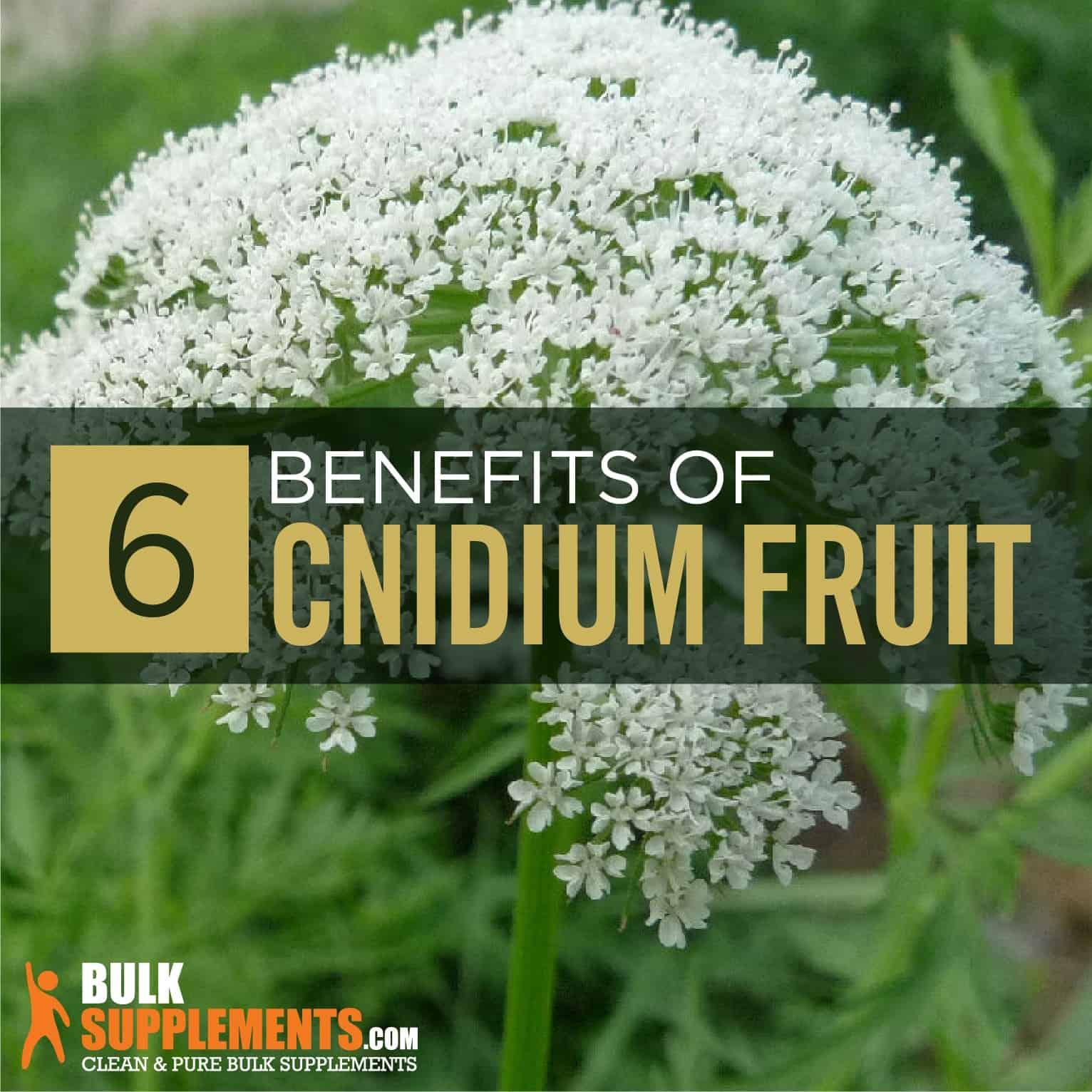 Cnidium Fruit