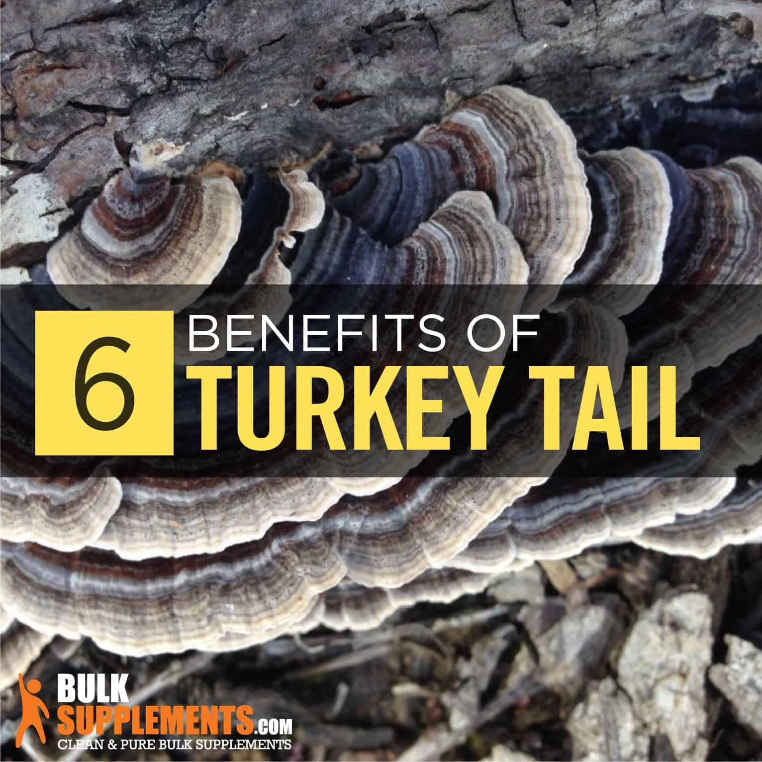 Turkey Tail (Coriolus Versicolor): Benefits, Side Effects
