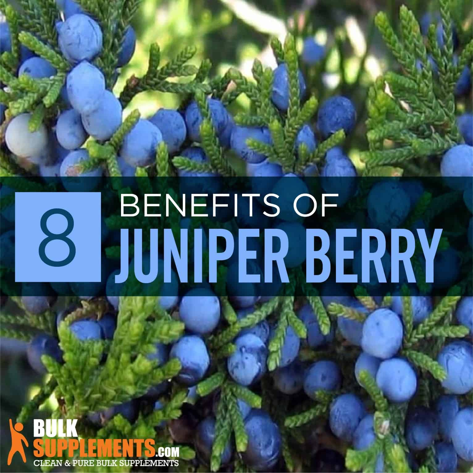 Juniper Berry Benefits Side Effects Bulksupplements Com